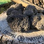The truth about Italy's white truffles