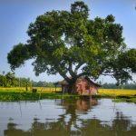 Travelling in Kerala Backwaters, India
