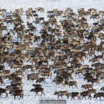 Tuktoyaktuk: Canada's last Arctic village?