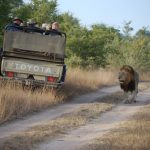 Things You Can Only Experience on Safari